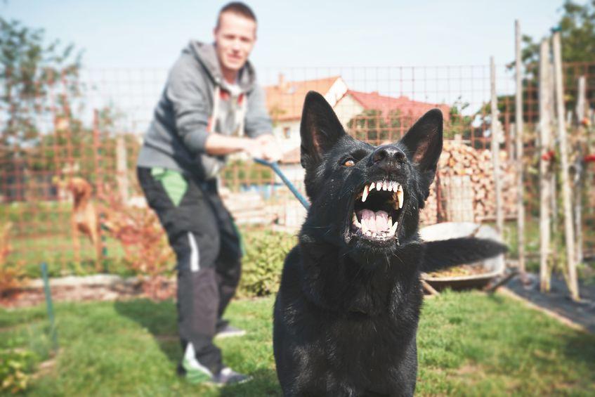 Ki a felelős a háziállat által okozott károkért?